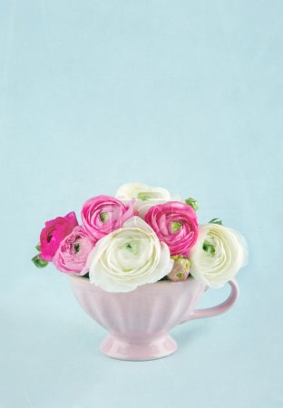 Ranunculus flowers with light blue background