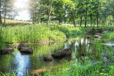 Photo for Small stream of water in a serene green summer landscape in Finland Europe with rays of sunlight - Royalty Free Image