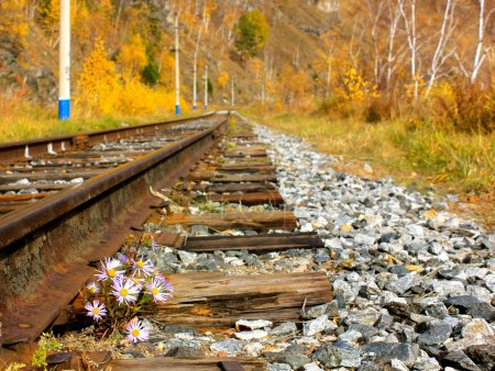 Small flowers struggling to survive along the rocky railroad tracks