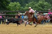 Nový Zéland rodeo - steer slaňování