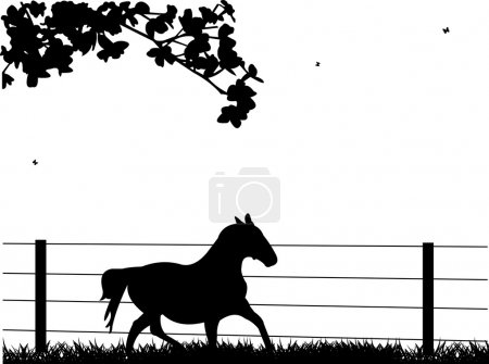 Horse running on grassland in spring silhouette