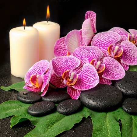 spa still life of blooming twig of stripped violet orchid (phala