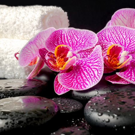 spa setting of zen stones with drops, blooming twig of stripped
