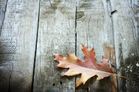 Autumn leaf on wooden boards background