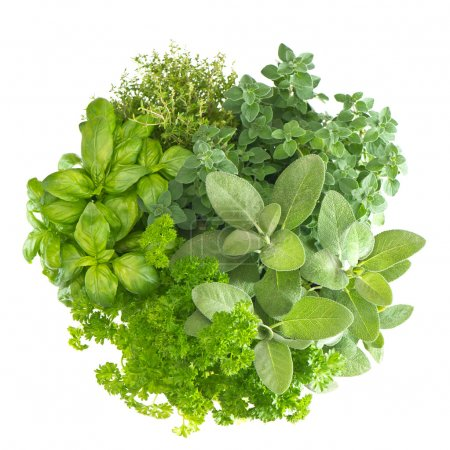 Photo for Variety fresh mediterranean herbs. marjoram parsley basil rosemary thyme, sage - Royalty Free Image