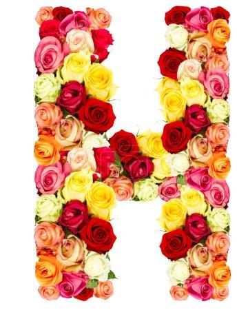 H, roses flower alphabet