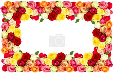 roses. colorful flowers frame