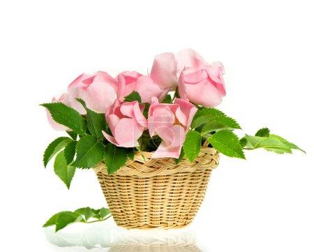 Photo pour Bouquet de belles roses rose sur fond blanc - image libre de droit