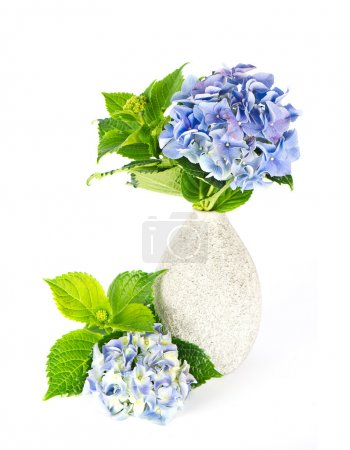 Photo for Blue hydrangea. beautiful hortensia in vase - Royalty Free Image