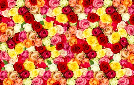 Photo for Assorted roses. colorful flower background - Royalty Free Image