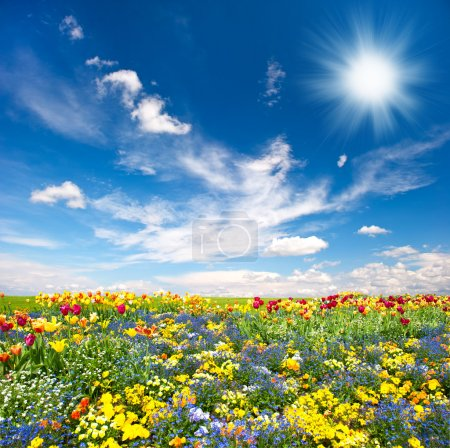 Photo for Flowerbed. colorful flowers over blue sky - Royalty Free Image