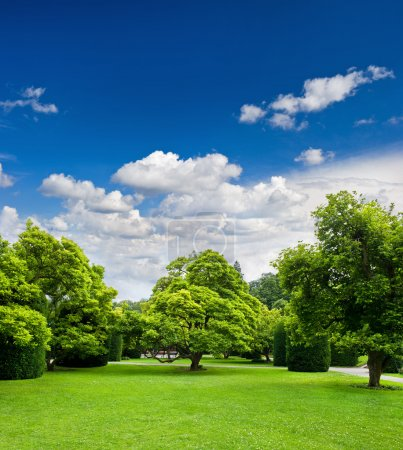 Photo for Beautiful park trees over blue sky. formal garden - Royalty Free Image