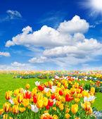 """Постер, картина, фотообои """"Тюльпаны цветы. Весенний пейзаж"""""""