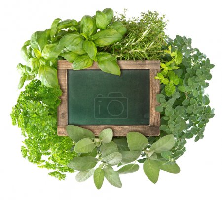 Photo pour Tableau noir vert blanc avec variété d'herbes fraîches sur fond blanc. tableau vide pour votre texte - image libre de droit
