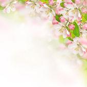 Jabloňové květy nad rozmazané přírodní pozadí
