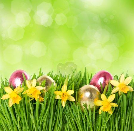 Photo pour Herbe verte fraîche avec des fleurs de narcisse et des œufs de Pâques sur fond flou nature - image libre de droit