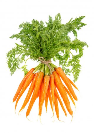 Photo for Bunch of fresh carrots with green leaves isolated on white background. Vegetable. Food - Royalty Free Image