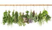 Varios fresh herbs