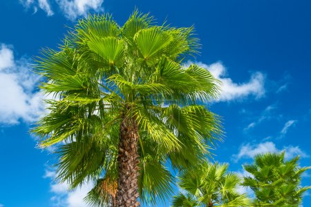 Green palm tree against beautiful blue sky