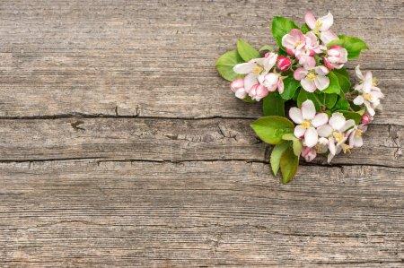 Photo pour Belles fleurs de pommiers sur fond de bois - image libre de droit