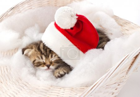 Furry kitten sleeping on christmas