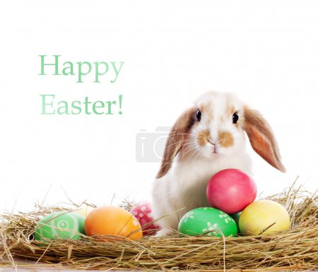 Photo for Funny little rabbit among Easter eggs in velour grass isolated on white - Royalty Free Image