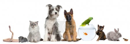 Group of pets with dog, cat, rabbit, ferret, fish, frog, rat, bird, guinea pig, reptile, snake against white background