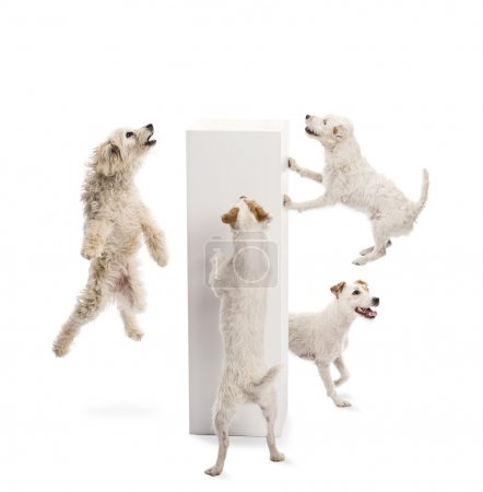 Dogs jumping and looking at pedestal against white background