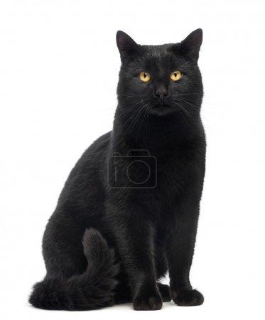 Photo pour Chat noir assis et regardant la caméra, isolé sur blanc - image libre de droit
