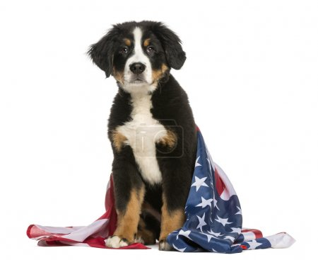 Patriotic dog sitting with american flag