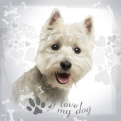 Close-up of a West Highland White Terrier panting, 18 months old