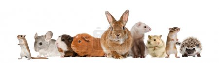 Group of pets, isolated on white...