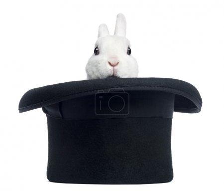 Photo pour Mini lapin rex apparaissant d'un chapeau haut de forme, isolé sur blanc - image libre de droit