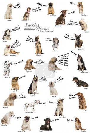 Composición de onomatopeyas ladridos de perros del mundo, inglés