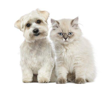 Photo pour Chaton et chien assis ensemble et en regardant la caméra - image libre de droit