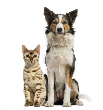 Cat and dog sitting together and facing at the camera
