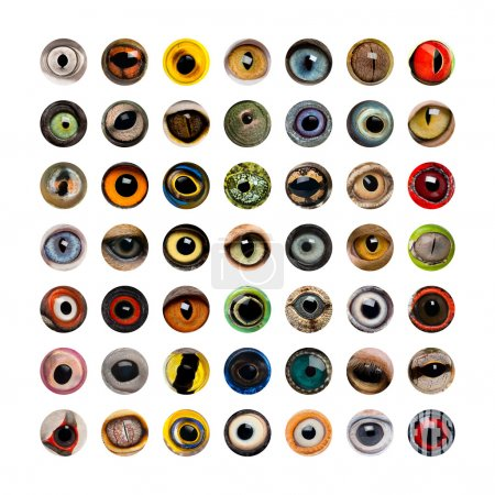 Photo for Composition of Animal eyes - Royalty Free Image