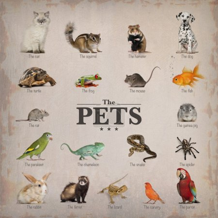 Poster of pets in English