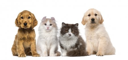 group of pets kitten and puppy