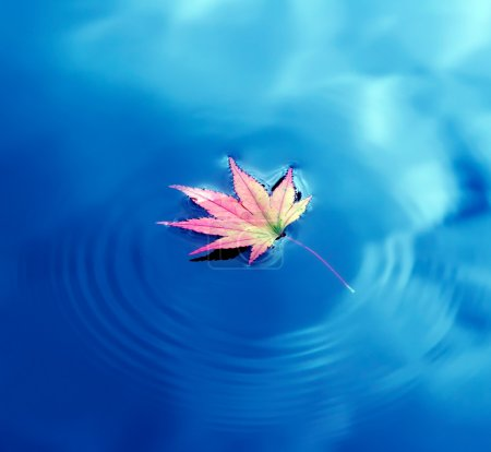Autumn maple leaf on water