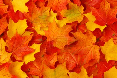 Photo for Fall leaves background - Royalty Free Image