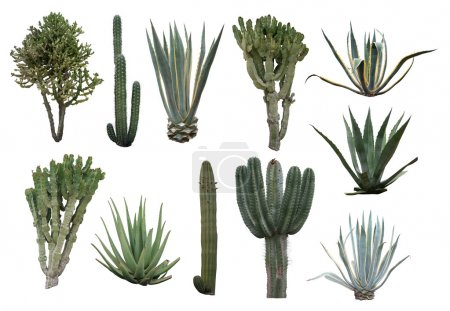 Photo for Cactus collection isolated on white background - Royalty Free Image