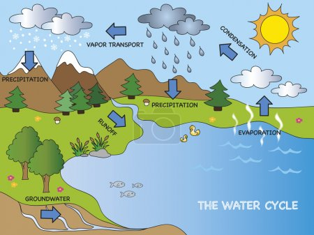 Illustration of funny water cycle...