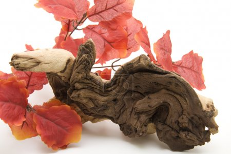 Wooden root