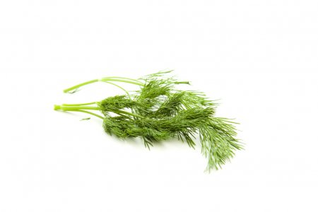 Photo for Fresh dill herbs - Royalty Free Image