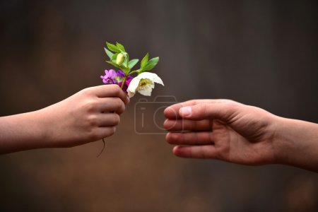 Photo for The child's hand flower gift - Royalty Free Image