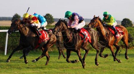 Horse Race 05