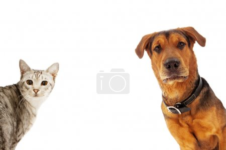Dog and Cat With Copy Space