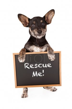 Mixed Breed Small Dog Holding Adoption Sign
