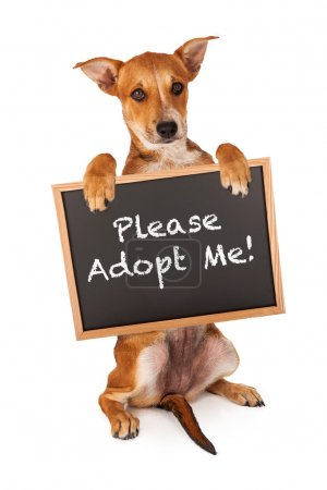 Puppy Holding Adopt Me Sign